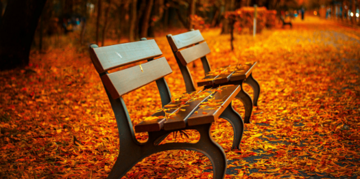 bench from unsplash.com